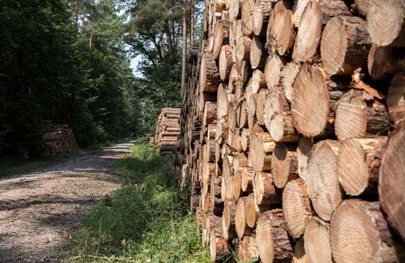 brennholz-1